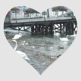 Swans and ducks in Lake Lucerne Sticker