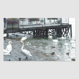 Swans and ducks in Lake Lucerne Stickers