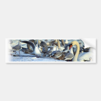 Swans and Seagulls in Winter Car Bumper Sticker