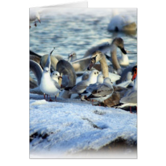 Swans and Seagulls in Winter Greeting Card
