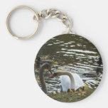 Swans, cisnes/ llaveros