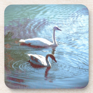 Swans Coaster