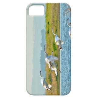 Swans coming in to land on a lake iPhone SE/5/5s case