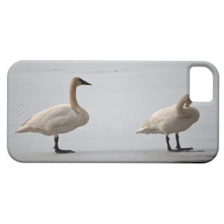 Swans Grooming at Water's Edge iPhone SE/5/5s Case