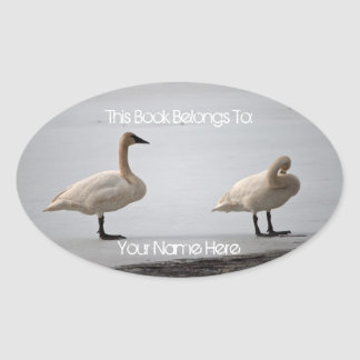 Swans Grooming at Water's Edge Oval Sticker