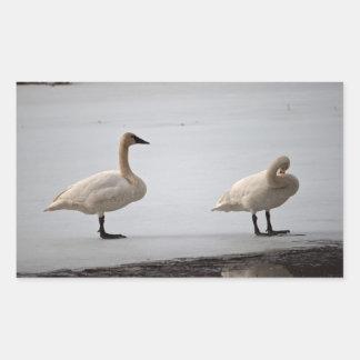 Swans Grooming at Water's Edge Rectangular Sticker