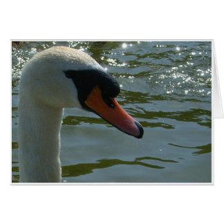 Swan's Head Card