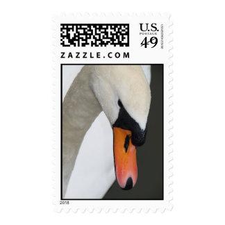 Swan's Head, Closeup Stamp