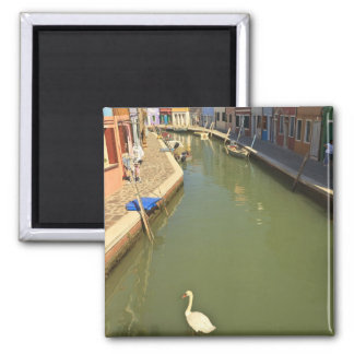 Swans in canal, Burano Island, Venice, Italy 2 Inch Square Magnet