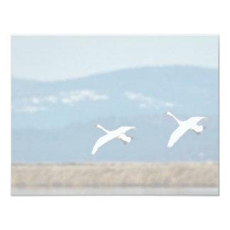 Swans in flight custom announcements