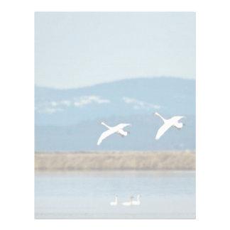 Swans in flight letterhead