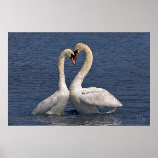 Swans in Love Print