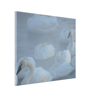 Swans In Morning Fog - Wildlife Photography Canvas Print