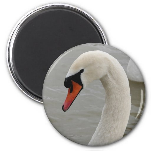 Swans in the lake 2 inch round magnet