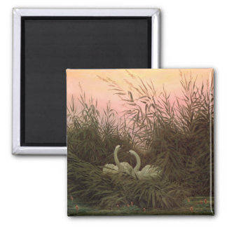 Swans in the Reeds, c.1820 Magnet