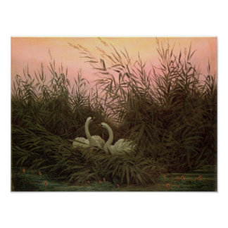 Swans in the Reeds, c.1820 Poster