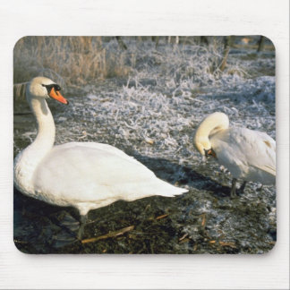 Swans, Kuban River, Russia Mouse Pad