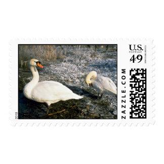 Swans Kuban River Russia Postage Stamp