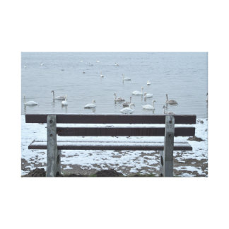 Swans, lake and the bench - canvas