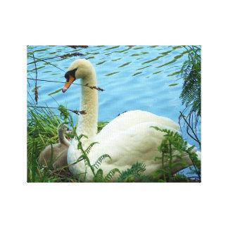 Swans Nest Canvas Print