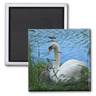 Swans Nest Mother Swan and Cygnet Magnet