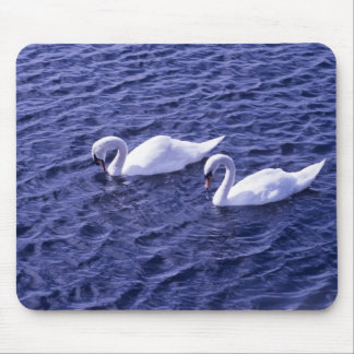 Swans on a lake mouse pad