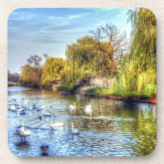 Swans on the River Nene HDR Beverage Coasters