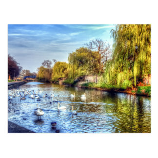 Swans on the River Nene HDR Postcard