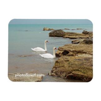 Swans on the sea shore. rectangular photo magnet