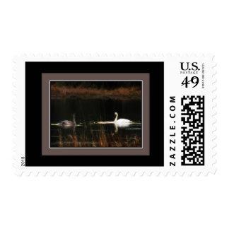 Swans Postage