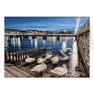 Swans shadows at Geneva lake, Switzerland Card