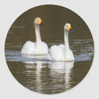 Swans Stickers