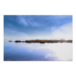swans swimming on calm fogy waters poster