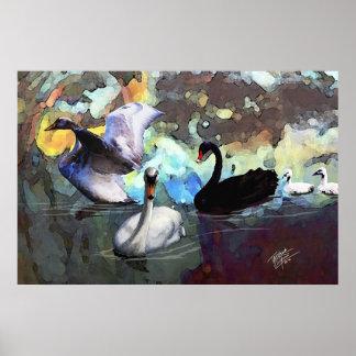 Swans Swimming Print