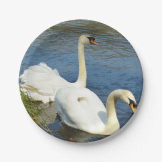 Swans Tehidy Country Park Cornwall England Paper Plate