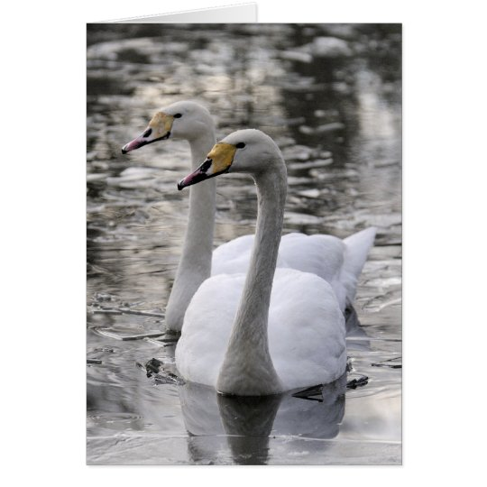 Swans Together Card
