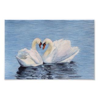swans watercolor photo