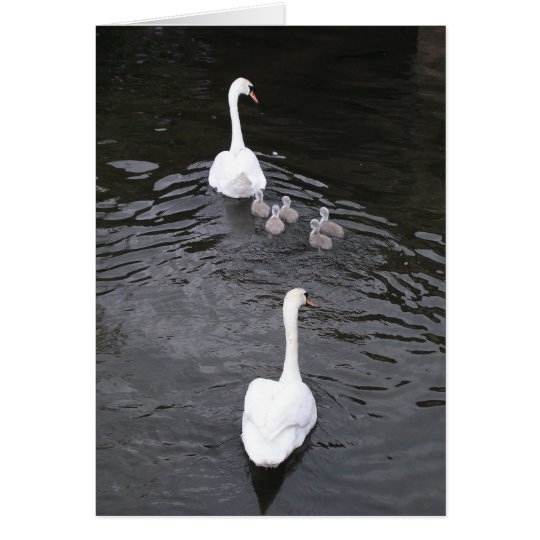 Swans with cygnets card