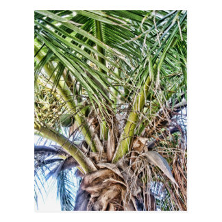 Swaying Palms Products Postcard