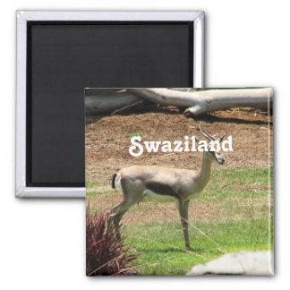 Swaziland Gazelle 2 Inch Square Magnet