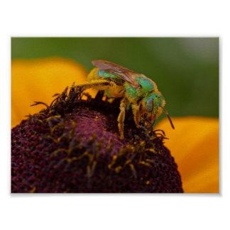 Sweat Bee At The Del Mar Fairgrounds Posters