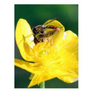 Sweat Bee Love Postcard