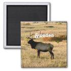 Swedish Elk Magnet