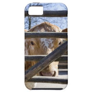 Swedish mountain cattle (Skansen) iPhone SE/5/5s Case