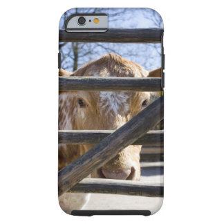 Swedish mountain cattle (Skansen) Tough iPhone 6 Case
