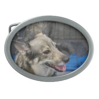 swedish-vallhund-2 jpg oval belt buckle