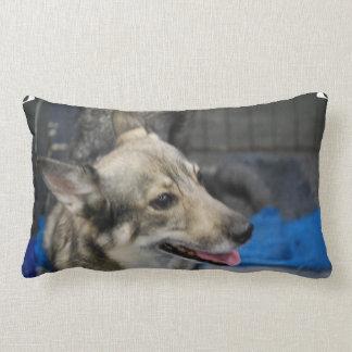 swedish-vallhund-2.jpg almohada
