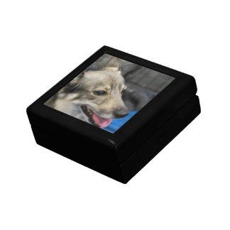 Swedish Vallhund Gift Box