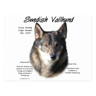 Swedish Vallhund History Design Postcard
