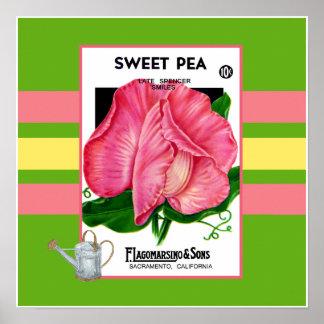 Sweeet Pea Flower Poster